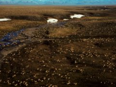 This undated aerial photo provided by US Fish and Wildlife Service shows a herd of caribou on the Arctic National Wildlife Refuge in northeast Alaska (US Fish and Wildlife Service via AP)