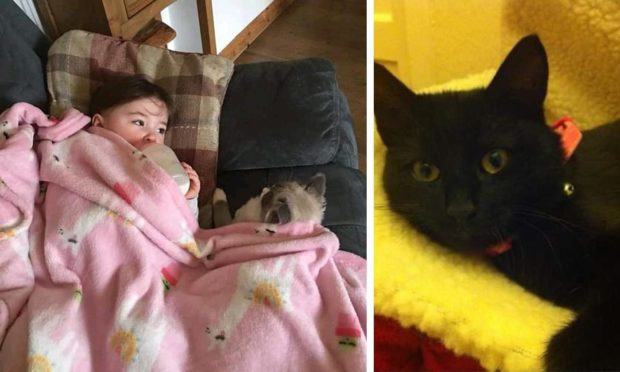 'We were gutted': Dundee mum's plea as she is forced to rehome cats after strangers fed pets