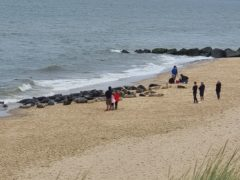 People close to seals at Horsey beach in Norfolk (Friends of Horsey Seals/PA)