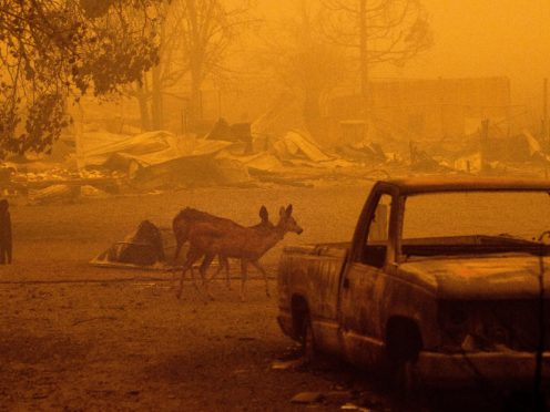 Deer wander among homes and vehicles destroyed by the Dixie Fire in the Greenville community of Plumas County (AP)