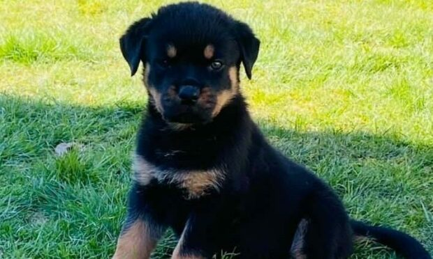 Dundee dog owners hit out at inbreeding after being sold poorly puppies