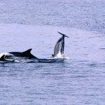 Renewable energy programme to examine impact on sea life