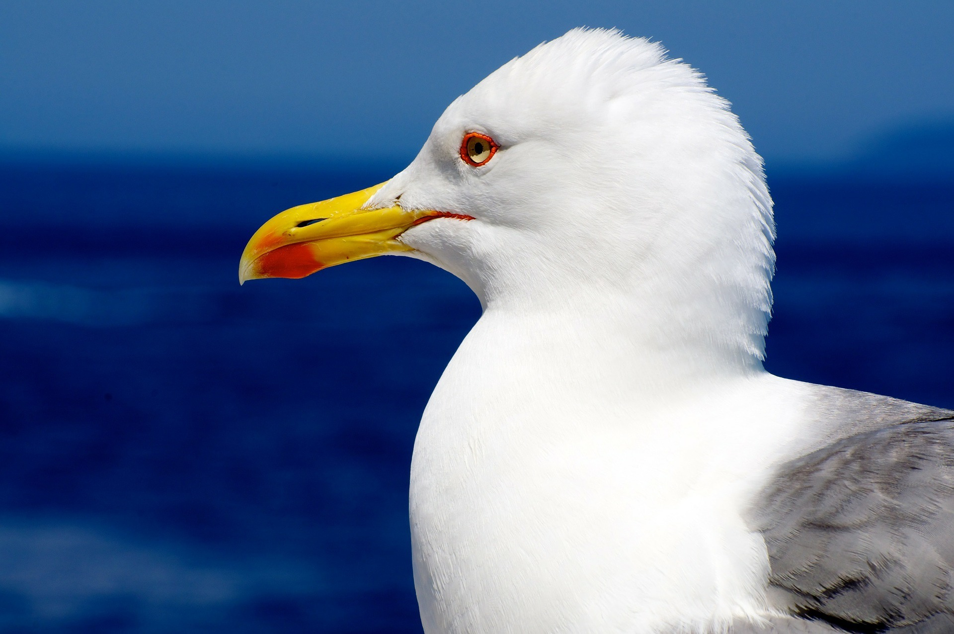 Seagulls may be fitted with