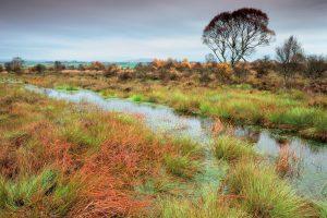 Flanders Moss NNR, a raised bog.