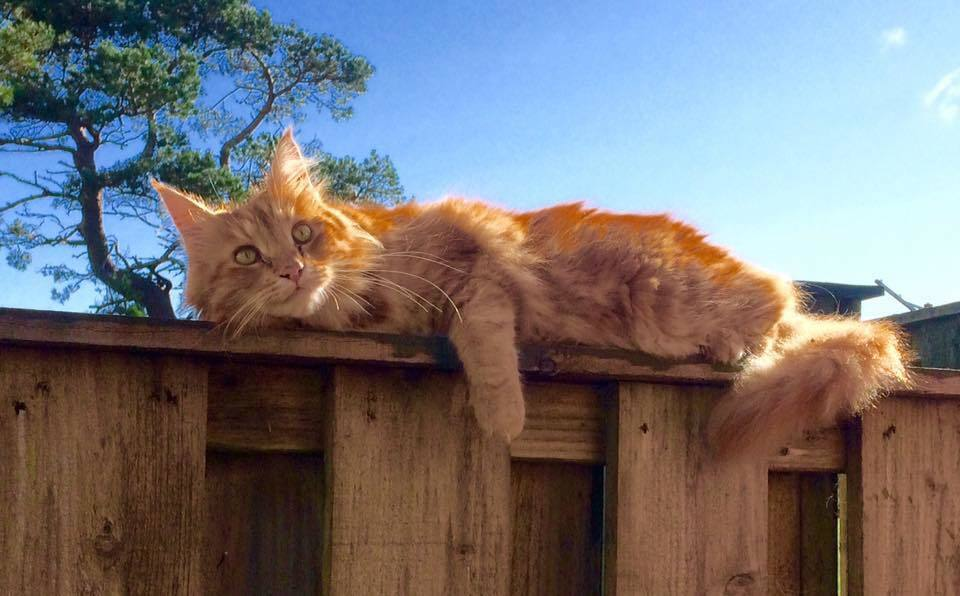 Parsley the cat has amassed 6,800 fans on social media. NO_T01_Parsley01