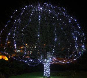 The illuminated tree outside the Corran Halls. NO_T51_Lightupalife_pic Kevin McGlynn