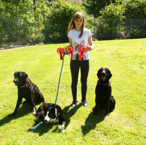 Chloe Campbell, 13, with a host of rosettes won by her dogs Rex Bran and Sparky. Photo Kevin McGlynn