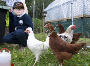 Hamish Fitzsimmons, aged seven, was delighted to meet some of the 'fancy' chickens reared by the Trust for the children's farm. Picture Iain Ferguson, alba.photos NO F28 LRET CHICKENS