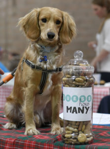 Lucky 'Radar' who successfully detected the number of dog biscuits in the jar, winning the competition to take it home with her. Picture Iain Ferguson, alba.photos NO F29 DOG SHOW 03