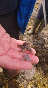 Small starfish were among the species discovered. Picture: Nic Goddard. NO F31 starfish