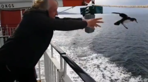Martin Carty release a Manx Shearwater from the MV Lord of the Isles. NO F41 Martin Carty releasing a manx shearwater