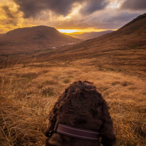 While Steven takes photographs, Fergus stops to take in a glorious view of Gleann Dubh. Photograph: Steven Marshall. NO-F50-Paws-for-a-View-of-Gleann-Dubh.jpg
