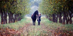 Finding a home for your horse is a hugely important decision.