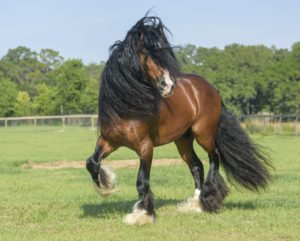 The new online service aims to create happier healthier horses.