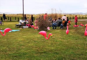Other caravan owners at Point Sands Holiday Park enjoyed the 'flamingo flocking'.