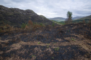 The damage caused by the flames and searing heat are clear to see in this image from the blackened ground at Glenfinnan. Photograph: Iain Ferguson, alba.photos NO F24 Glenfinnan fires 06