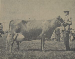 In 1971: Clochkeil farmers J and M Barr once again stole the show at Kintyre Agricultural Society's annual big day out at Anderston Park, Campbeltown. On a day blessed with uninterrupted sunshine, their prizewinning Ayrshire cow won the premier award in the cattle section, the Overhead Ayrshire Championship. The Barrs also won many other trophies and awards for their cattle.