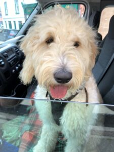 Elfie, the 'happiness hound', enjoyed her first – but not last! – trip on the happy bus.